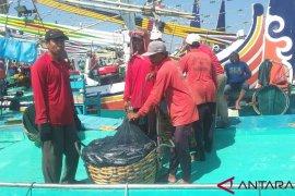 Predator ikan muncul, nelayan Jembrana kembali paceklik