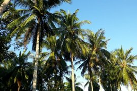 Kemenperin Kembangkan Industri Kelapa Terpadu di Gorontalo