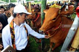 Jatim targetkan populasi sapi tumbuh 3,5 persen