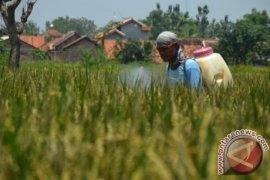 Ratusan hektare sawah di Karawang diserang hama