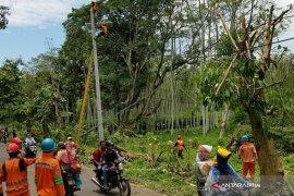 PLN Jember Pulihkan 100 Persen Jaringan Listrik Pascabencana Angin Kencang