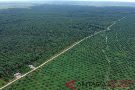 Palm oil exports hollowed by regulations in destination nations