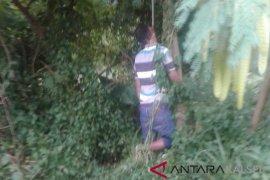 Polisi selidiki temuan mayat tergantung di pohon
