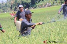 Gerakan pengendalian massal hama amankan produksi tanaman HSS