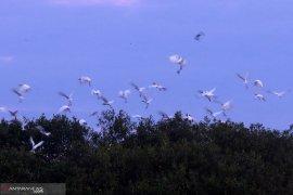 Jumlah spesies burung di Indonesia bertambah jadi 1.794 spesies