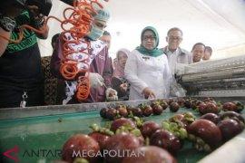 Buah Manggis Kabupaten Bogor diekspor ke Tiongkok