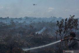 Kebakaran hutan dan lahan di Pulau Rupat sulit dipadamkan, begini penjelasannya
