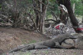 """Tantangan """"ide gila"""" penutupan Taman Nasional Komodo"""