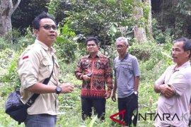 Kalbar serius kembangkan Durian Serumbut