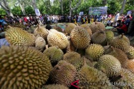 Durian festival on Sebatik Island