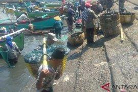 Harga anjlok, nelayan Jembrana panen ikan