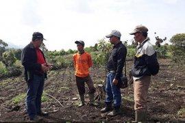 Peneliti BPTP gandeng petani tebu Kerinci terapkan teknologi penanaman