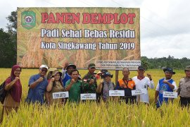 Padi Sehat Bebas Residu tingkatkan produktivitas petani