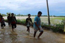 Kerugian pertanian di Madiun akibat banjir capai Rp7 miliar lebih