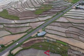 Ratusan hektare perkebunan sawit Mukomuko dicetak jadi sawah