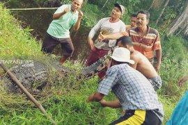 Warga Kolang tangkap buaya yang kerap masuk ke pemukiman