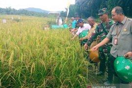 DKPP Belitung-BPTP gelar panen dan temu lapang Inovasi perbenihan VUB padi