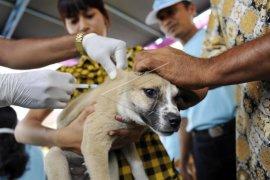 Digigit hewan rabies, enam warga Cianjur diberikan vaksi