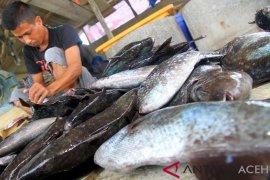 Bahan Baku Ikan Asin Melimpah