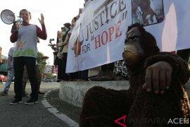 Aksi Peduli Orangutan Sumatera