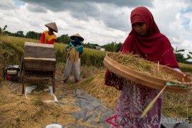 Nilai Tukar Petani di Maluku turun 0,18 persen