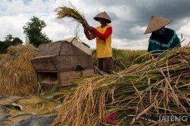 Nilai tukar petani Kepulauan Bangka Belitung turun