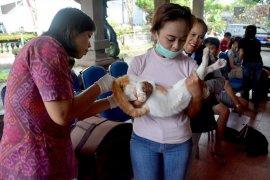 Distan Denpasar lakukan vaksinasi tangkal virus rabies