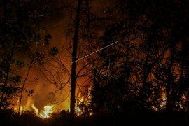 Ribuan orang terpaksa mengungsi akibat kebakaran hutan di Korsel