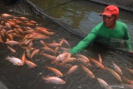 Pemkab Tangerang tingkatkan maksimal budidaya ikan air tawar