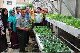 BPTP panen sayuran hidroponik dengan bahan daur ulang