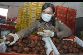 Triwulan pertama 2019, ekspor komoditas pertanian Bali meningkat