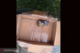 Petugas kebersihan Rejang Lebong temukan granat dalam bak sampah