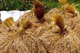 Hortikultura dorong NTP Banten naik 0,36 persen