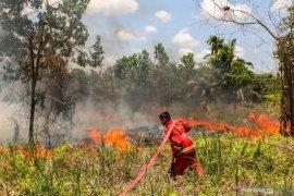 Dua hektare lahan gambut Aceh Barat terbakar