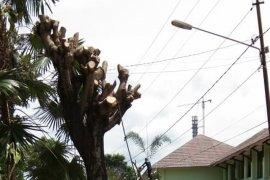 Penebangan pohon di dekat jaringan listrik Page 1 Small