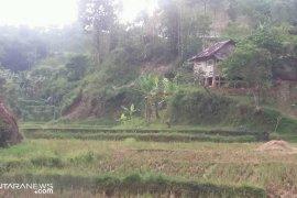 Luas lahan pertanian abadi Kota Sukabumi akan ditambah