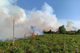 150 hektare lahan gambut di Mempawah terbakar