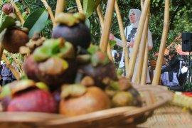 Area perkebunan manggis Purwakarta akan dijadikan agrowisata