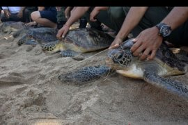 Sejumlah instansi komitmen lestarikan satwa liar di Bali