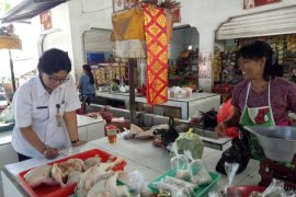 Distan Denpasar periksa daging pakai Organoleptik