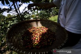 Produksi kopi kabupaten Bandung