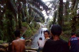 Hujan deras landa Labura, pohon sawit tumbang