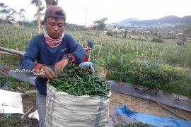Harga sayur mayur anjlok di Curup