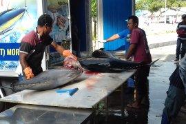 BPS belum catat ekspor komoditas Maluku Utara