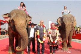 """Gajah Taman Safari pukau pengunjung """"Bogor Fest 2019"""""""