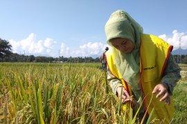 Petani Aceh Besar beralih gunakan pupuk organik