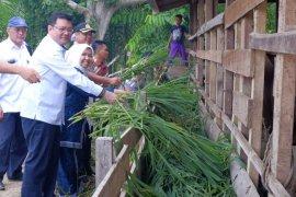 Bupati Muaro Jambi apresiasi  program revitalisasi ekonomi rakyat di lahan gambut