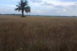 Kekeringan landa 1.335 hektare lahan sawah di Langkat