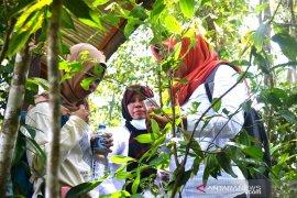Lapsus - Kebun Raya Balangan, Antara Integritas Konservasi dan Pembangunan Ekonomi