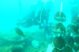 Tapaktuan Diving Club tanam terumbu karang di Aceh Selatan